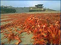 s_crab1