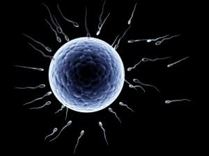 egg+sperm-300x225